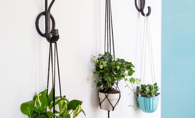 plant hangers on wal for greenery